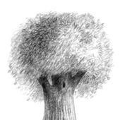Deciduous broad-leaved tree — Stock Photo