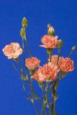 Kolekcja kwiatów — Zdjęcie stockowe