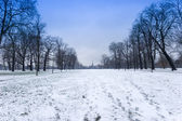 Hyde park in winter — Stock Photo