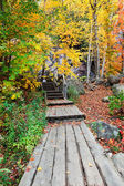 Boardwalk in the Woods — Stock Photo