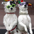 Stock Photo: Funny Dogs