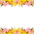Floral Frame — Stock Photo
