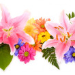 Floral Panorama — Stock Photo
