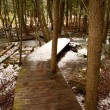 Boardwalk in the Woods — Stock Photo