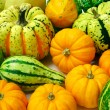 Squash Arrangement - Stock Photo