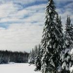 Beautiful Winter Scene by a Frozen Lake — Stock Photo