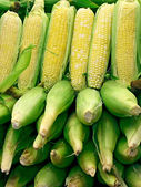 Corn Arrangement — Stock Photo