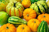Squash Arrangement — Stock Photo