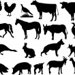 Stock Vector: Farm animals silhouettes