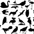 Birds silhouettes - Stock Vector
