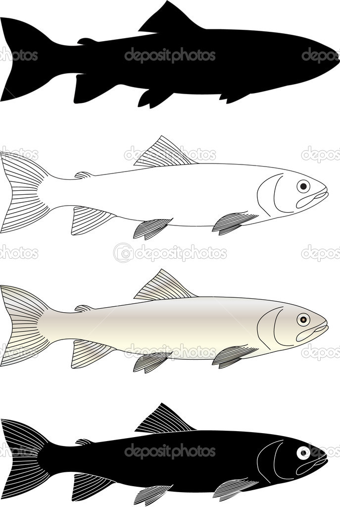 Trout fish - vector  Stock Vector #1991887