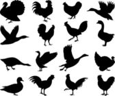 Poultry silhouettes — Stock Vector