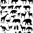 Animals silhouettes — Stock Vector #2014899