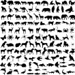 Vector de stock : Animals silhouettes