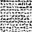 Animals silhouettes — Image vectorielle