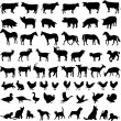 Big collection of farm animals — Image vectorielle