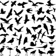 Big collection of birds — Imagens vectoriais em stock