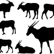 Antelopes - Stock Vector