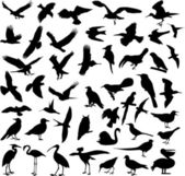Big collection of birds — Stock Vector