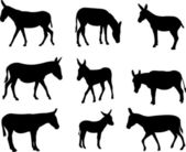 Mules and donkeys silhouettes — Stock Vector
