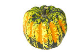 Carnival Winter Squash — Stock Photo