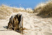 Timber in Sand — Stock Photo