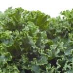 Nutritious Wet Kale — Stock Photo