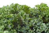 Nutritious Wet Kale — Stock Photo