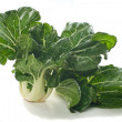 Fresh Choy Sum — Stock Photo