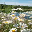 Stock Photo: Wild Flowers and Pond