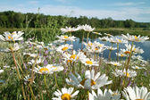 Wild Flowers and Pond — Stock Photo