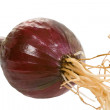 Small Red Onion - Stock Photo