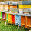 Coloured beehives - Stock Photo