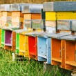 Coloured beehives — Stock fotografie