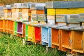 Coloured beehives — Stock Photo