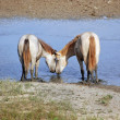 Horses in love — Stock Photo