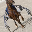 Stock Photo: Harness racing