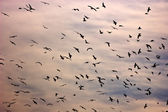 Birds in the sky — Stock Photo