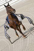 Harness racing — Stock Photo