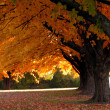 Trees in Fall - Stockfoto