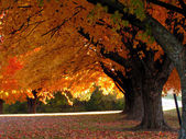 Trees in Fall — Stock Photo
