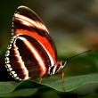 Orange and black butterfly — Stock Photo #2031898