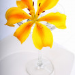 Yellow Lily in Glass — Stock Photo