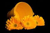 Yellow Gerber Pail — Stock Photo