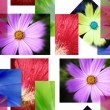 A lot pf pictures - flowers. - Stock Photo