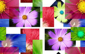 A lot pf pictures - flowers. — Stock Photo