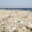 Sand and shells on beach. — Stock Photo