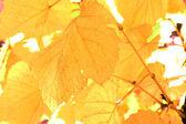Beautiful background leafs — ストック写真