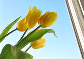 The flowers in a window — Stock Photo