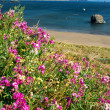 Flowers on the Coast — Stock Photo